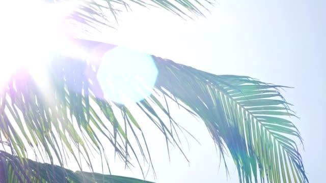 Sunray à venir à travers les feuilles de palmier