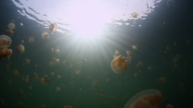 sunrays beam through the water as jellyfish move along in the backround - palau video stock e b–roll
