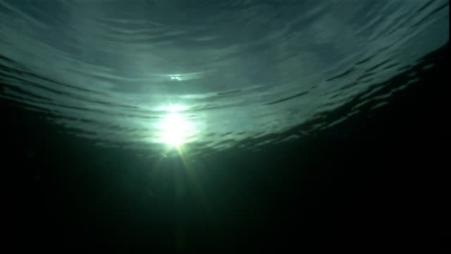 sunrays shine through the ocean's rippling surface. - tide stock videos & royalty-free footage
