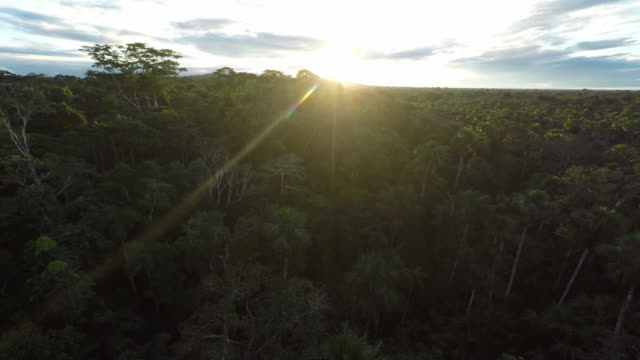 Sunrise Aerial over Amazon Jungle