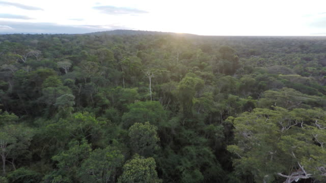sunrise aerial over amazon rainforest - forward & back - tropical rainforest stock videos & royalty-free footage