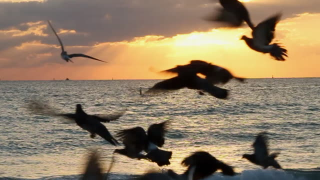 ws slo mo sunrise and birds flying on beach / miami, florida, united states - florida stati uniti video stock e b–roll