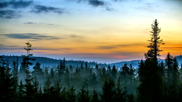 Sunrise and fog in the forest - Drammen, Norway
