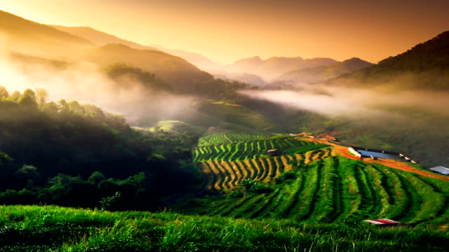 4K : Sunrise and mist on mountain view at the north of thailand