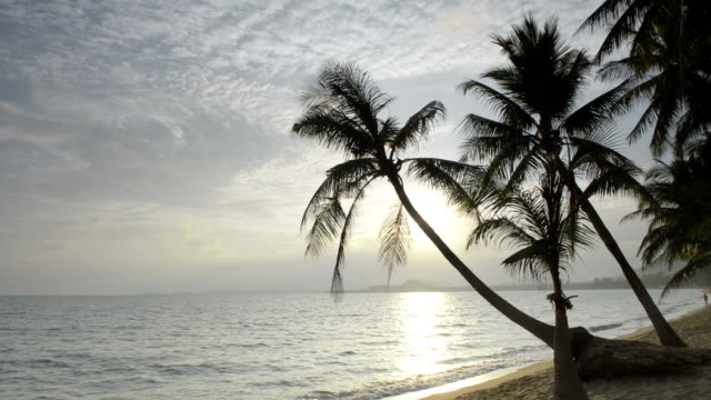 Sunrise at beach with palm trees