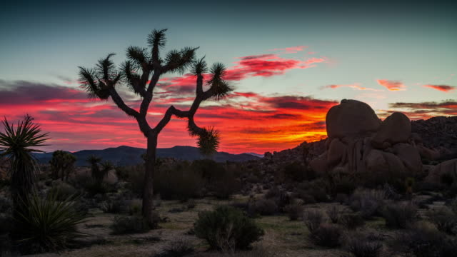 sunrise at joshua tree national park - camera pan - cactus video stock e b–roll