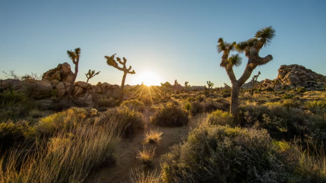 t/l 8k sunrise at joshua tree national park - joshua tree national park stock videos & royalty-free footage