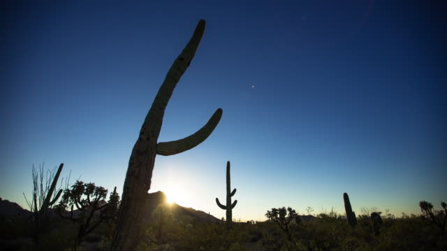 Sunrise at Saguaro National Monument - Time Lapse