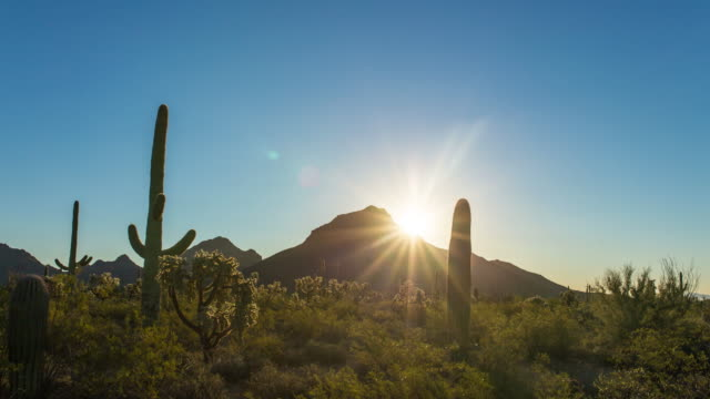 sonnenaufgang am saguaro national monument - arizona stock-videos und b-roll-filmmaterial
