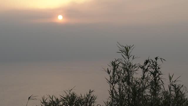 sunrise at suruga bay, shizuoka, japan - bamboo plant stock videos & royalty-free footage