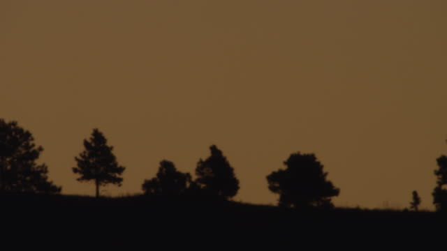 ws pan sunrise behind at silhouetted landscape / custer state park, south dakota, united states - custer state park stock videos & royalty-free footage