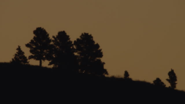 ws sunrise behind at silhouetted landscape / custer state park, south dakota, united states - カスター州立公園点の映像素材/bロール