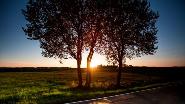 CRANE DOWN: Sunrise behind Tree