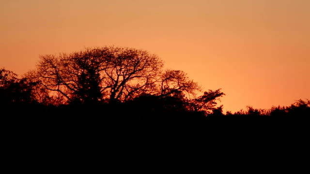 T/L Sunrise behind trees in the bush/ Limpopo/ South Africa