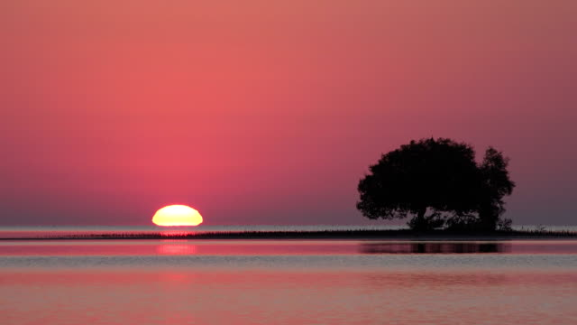 sunrise close to a big mangrovia tree - horizon over water stock videos & royalty-free footage