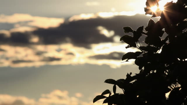 ws sunrise / foz do iguacu, parana, brazil - brasile meridionale video stock e b–roll