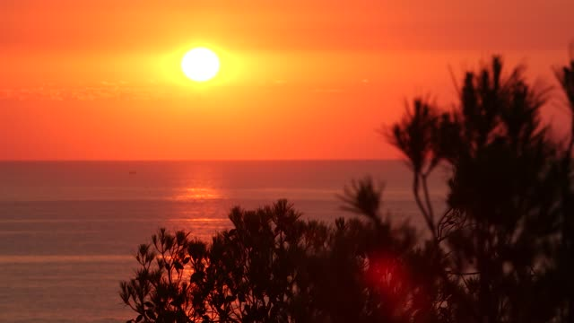 sunrise ibiza - pine tree stock videos & royalty-free footage