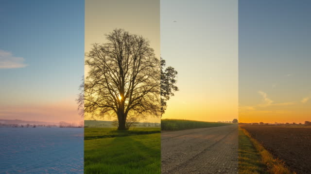 t/l sunrise in all four seasons - single tree stock videos & royalty-free footage