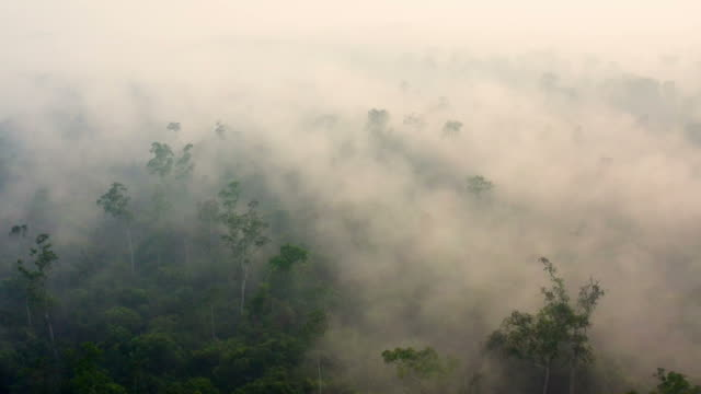 熱帯雨林を覆う重い煙を伴うボルネオ・カリマンタンの日の出 - ボルネオ島点の映像素材/bロール