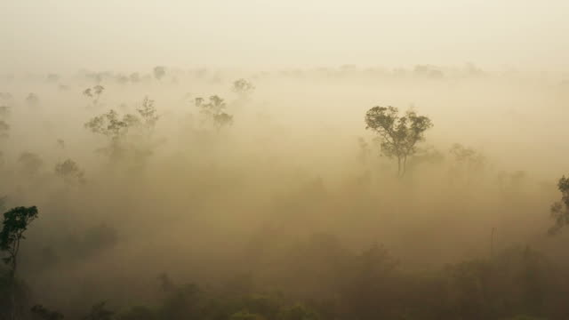 sunrise in borneo kalimantan with heavy smoke covering the rainforest - drought stock videos & royalty-free footage