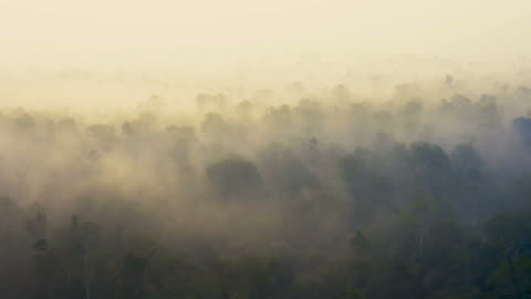 sunrise in borneo kalimantan with heavy smoke covering the rainforest - climate stock videos & royalty-free footage
