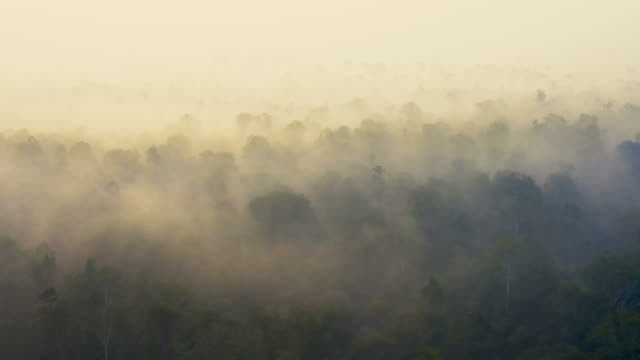 vídeos de stock e filmes b-roll de sunrise in borneo kalimantan with heavy smoke covering the rainforest - fire natural phenomenon