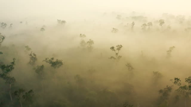 sunrise in borneo kalimantan with heavy smoke covering the rainforest - rainforest stock videos & royalty-free footage