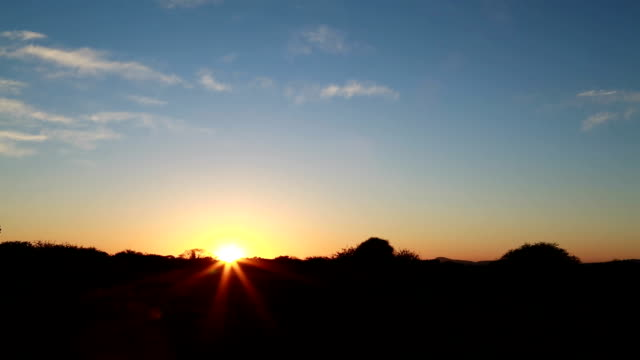 t/l sunrise in the bush/ limpopo/ south africa - thorn stock videos & royalty-free footage