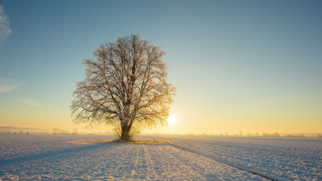 t/l sunrise in the country in 4 seasons - single tree stock videos & royalty-free footage