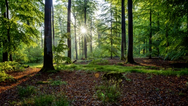 sunrise in the forest, spessart, franconia, bavaria, germany - zona arborea video stock e b–roll