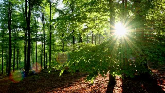 Sunrise in the forest, Spessart, Franconia, Bavaria, Germany