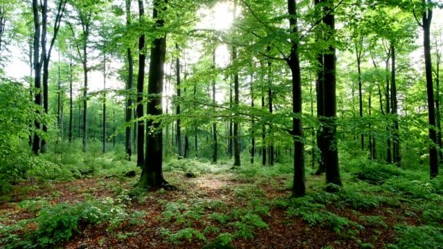 sunrise in the forest, spessart, franconia, bavaria, germany - 樹木点の映像素材/bロール