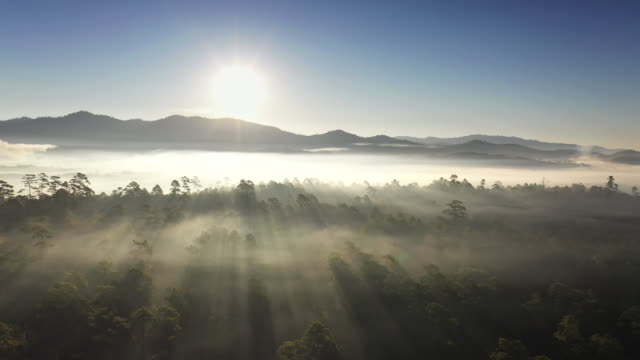 vídeos de stock e filmes b-roll de sunrise in the misty forest, marvelous view of drone flying over forest with mountain in the morning. - raio de luz