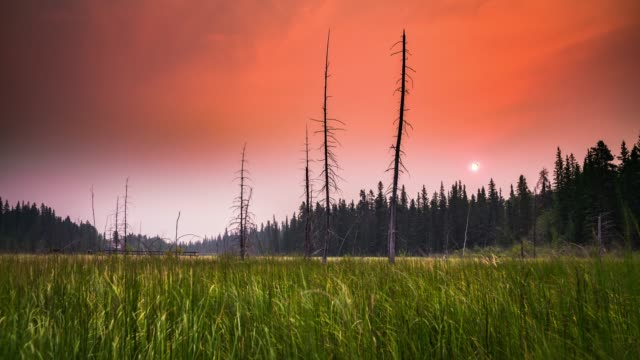 sunrise in the swamp - alberta, canada - swamp stock videos & royalty-free footage