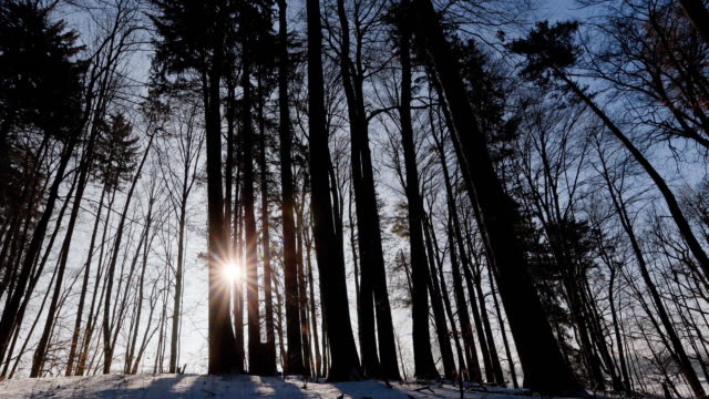 MS T/L Sunrise in winter forest / Ambach, Bavaria, Germany
