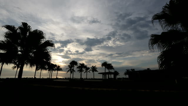 sunrise landscape of a beach of danang and trees in a shadow - ダナン点の映像素材/bロール