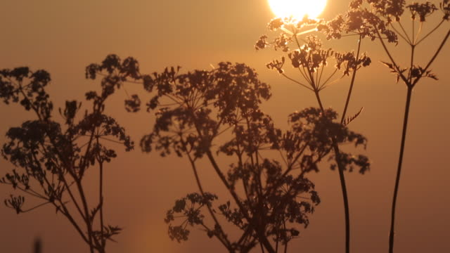 Sunrise near Mansfield, Nottinghamshire, England, UK, Europe
