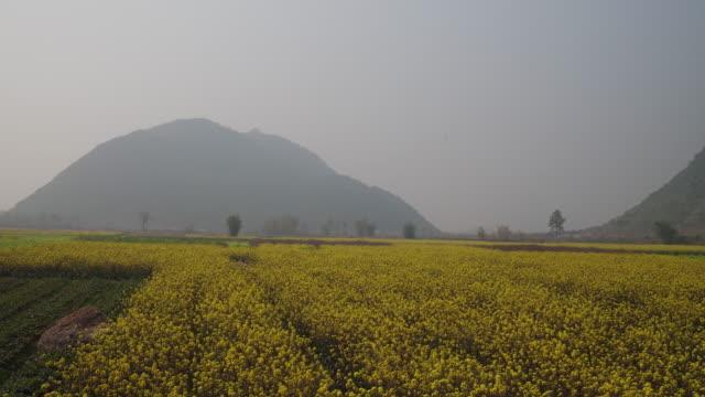 Sunrise of rapeseed flower field in Yangshuo ,China