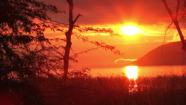 sunrise on lake baringo, kenya - four animals stock videos & royalty-free footage