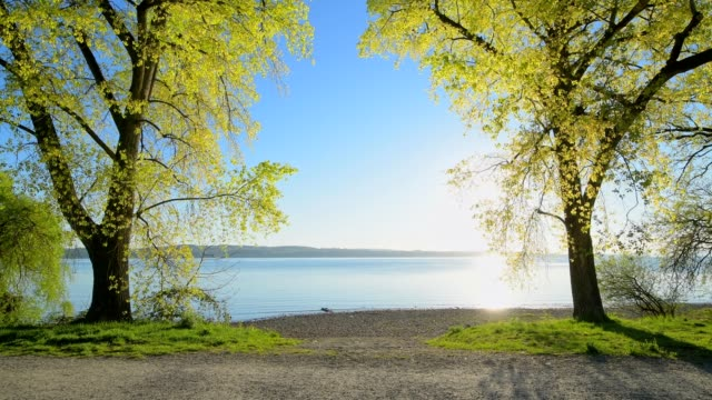 sunrise on lakeshore with poplar trees, konstanz, bodensee, baden-württemberg, germany - lakeshore stock videos & royalty-free footage