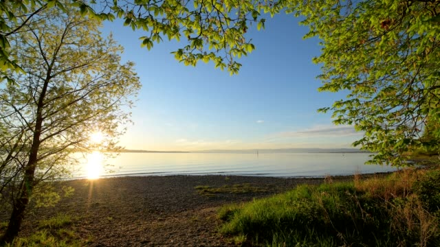 sunrise on lakeshore with trees, konstanz, bodensee, baden-württemberg, germany - lakeshore stock videos & royalty-free footage