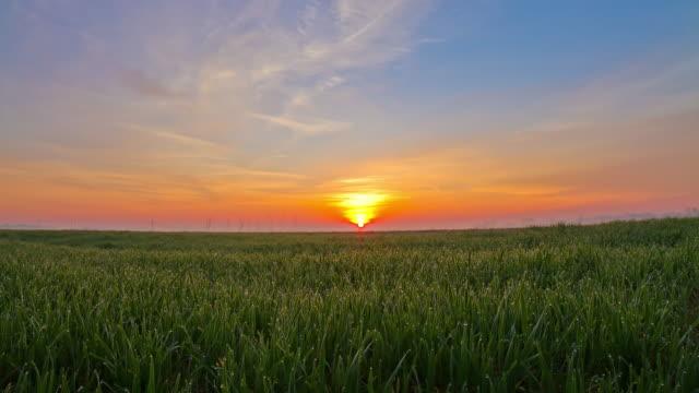 HD-ZEITRAFFER: Sonnenaufgang über einem Feld von Weizen
