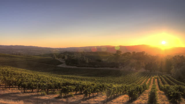 vídeos de stock e filmes b-roll de sunrise over california vineyard - vinha