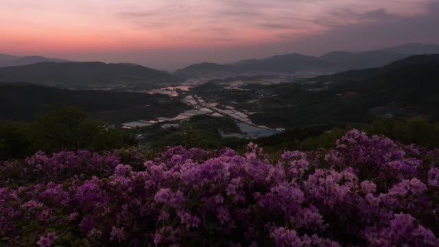 sunrise over field of royal azalea in bonghwasan mountain / namwon-si, jeollabuk-do, south korea - heather stock videos & royalty-free footage