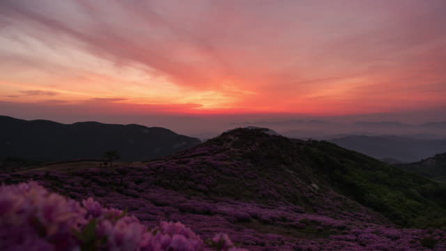 stockvideo's en b-roll-footage met sunrise over field of royal azalea in hwangmaesan mountain / hapcheon-gun, gyeongsangnam-do, south korea - bergrug