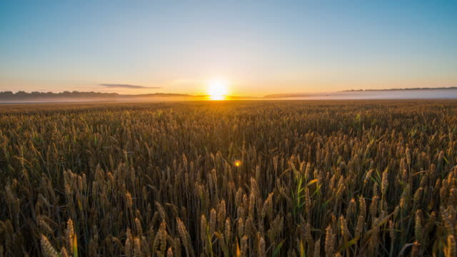 t/l sunrise over field of wheat - dramatic sky stock videos & royalty-free footage