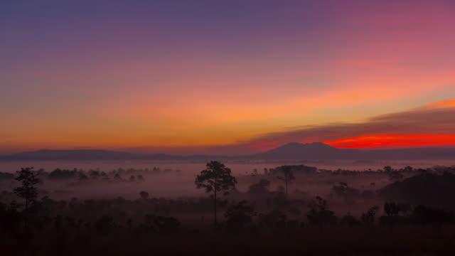 vídeos de stock e filmes b-roll de sunrise over forest pine in morning with misty, time lapse - savana