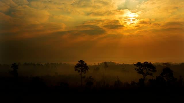 pine a alba sopra la foresta di mattina nebbiosa