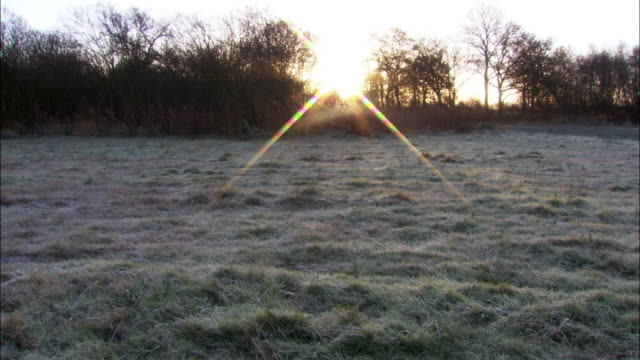 sunrise over frosty fenland, cambridgshire, uk - fen stock videos and b-roll footage