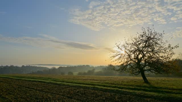 sunrise over meadow, vielbrunn, michelstadt, odenwald, hesse, germany - ländliches motiv stock-videos und b-roll-filmmaterial